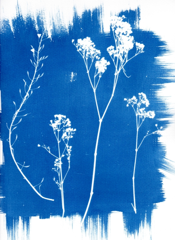 Single Cyanotype Workshop for 6-12 year olds